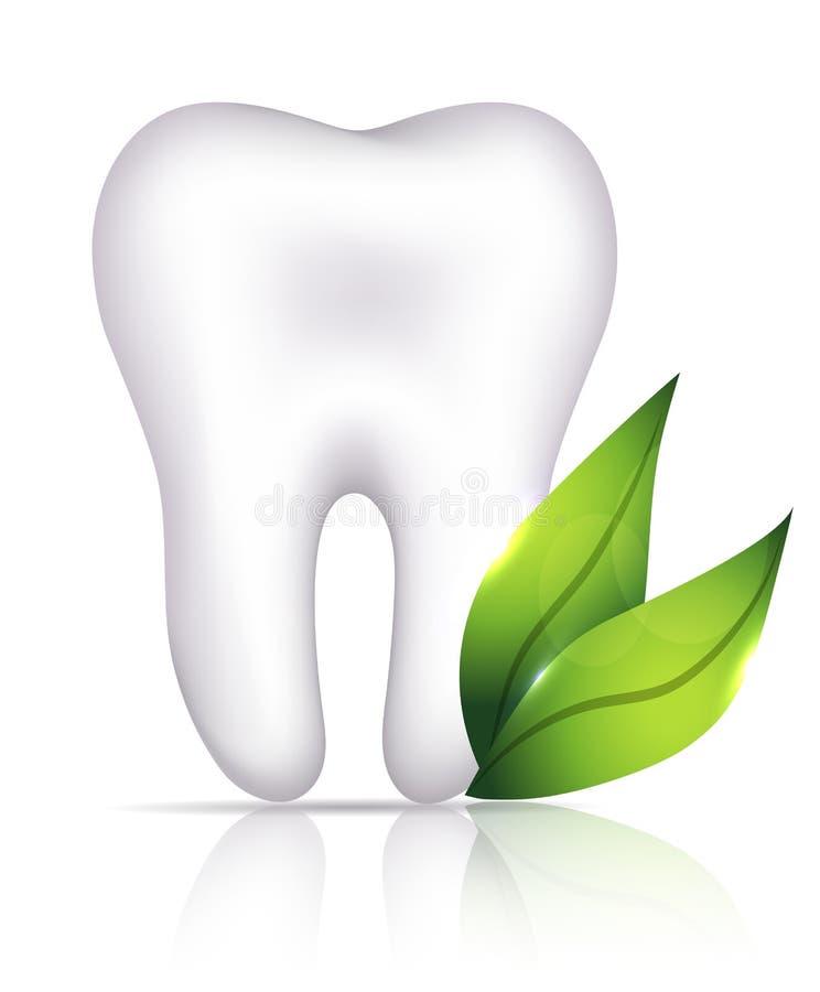 Dente bianco sano e foglie verdi illustrazione di stock