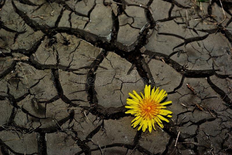 Download Dente-de-leão foto de stock. Imagem de marrom, terra - 16874606