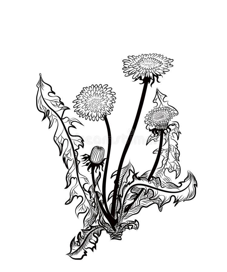 Dente-de-leão ilustração do vetor