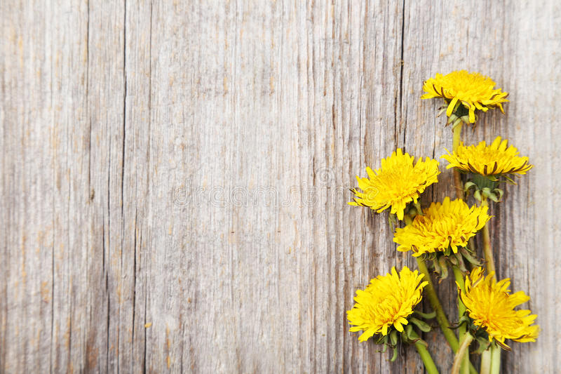 Dente-de-leão amarelo fotografia de stock royalty free