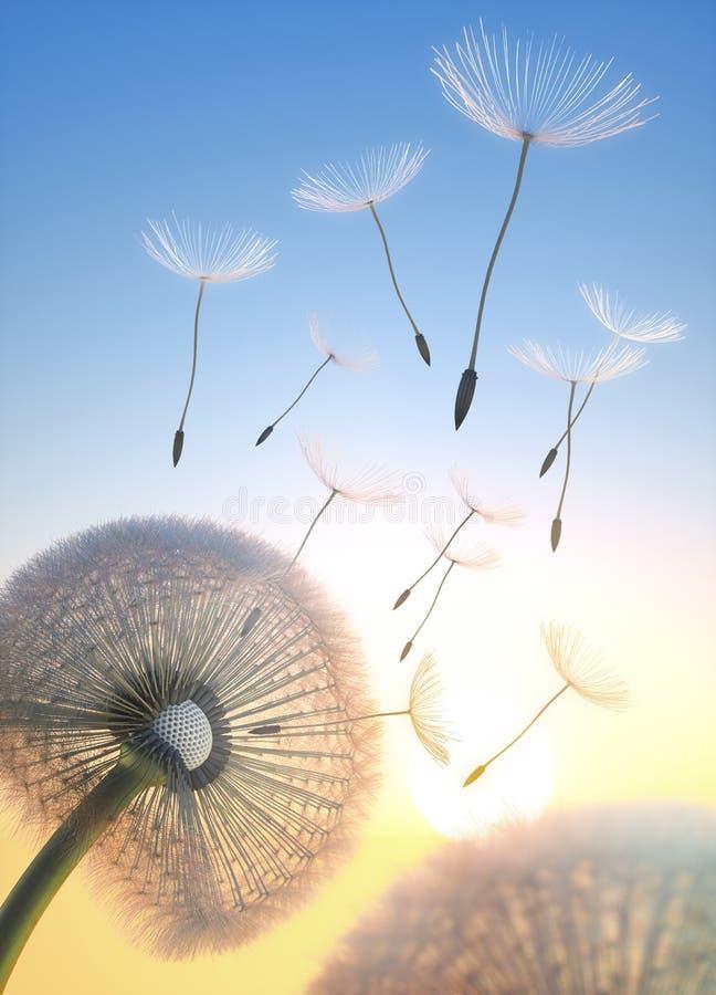 Dente-de-leão 2 com as sementes que voam no céu de nivelamento fotos de stock royalty free