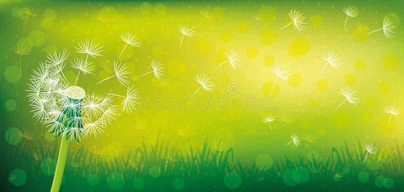 Dente-de-leão em um fundo verde ilustração royalty free