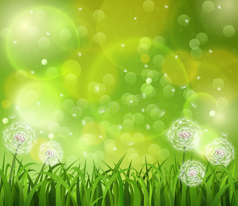 Dente-de-leão na grama em um fundo verde fotos de stock