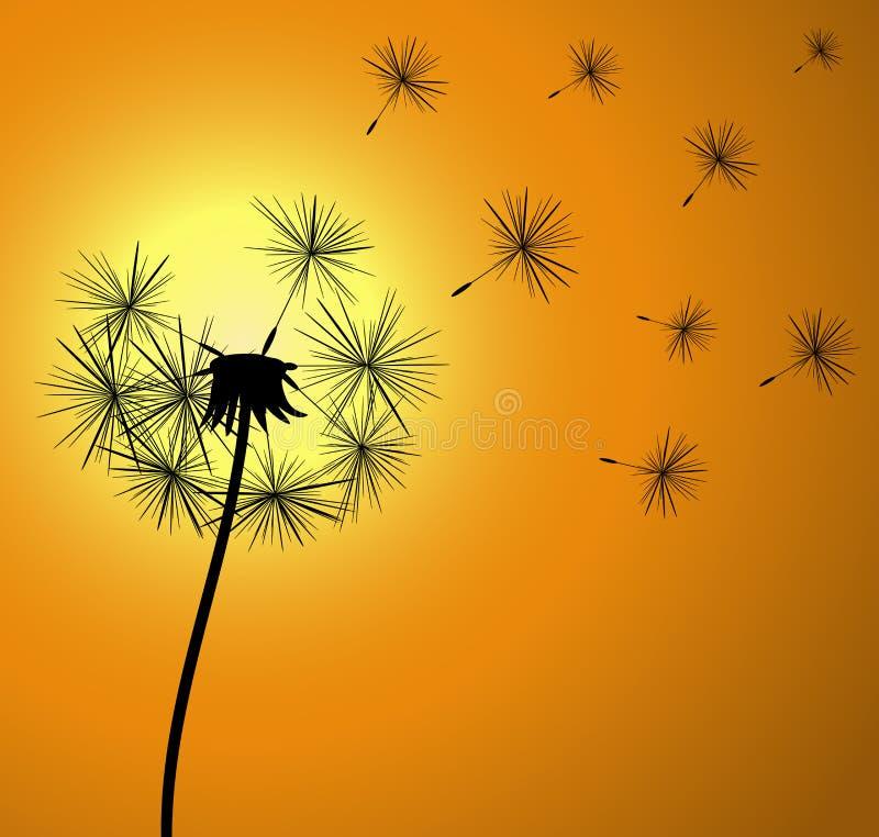 Dente-de-leão no por do sol ilustração do vetor