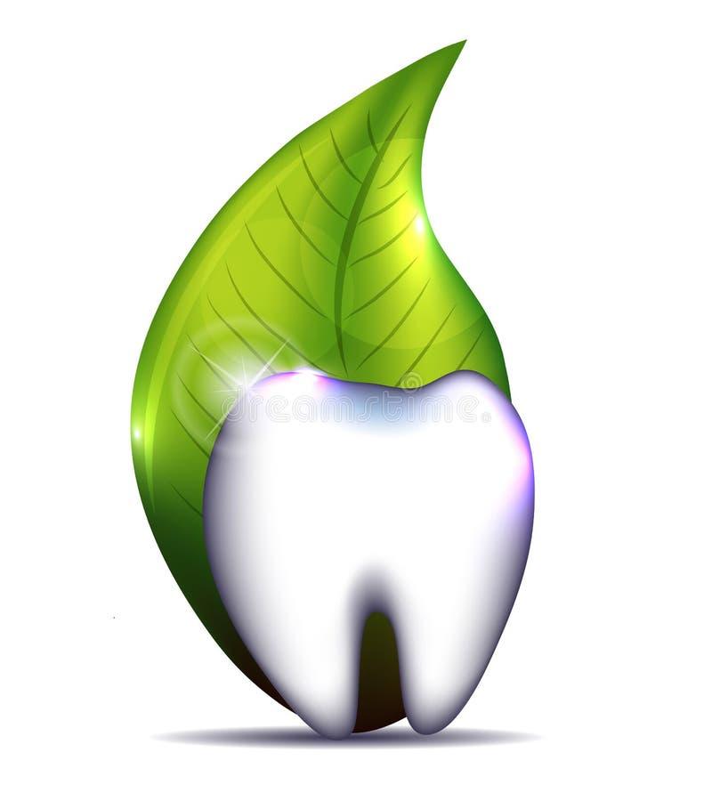 Dente e foglia sani illustrazione di stock