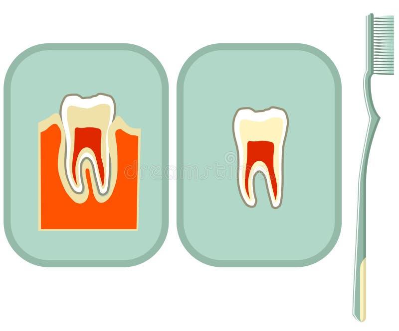 Dente e toothbrush illustrazione vettoriale