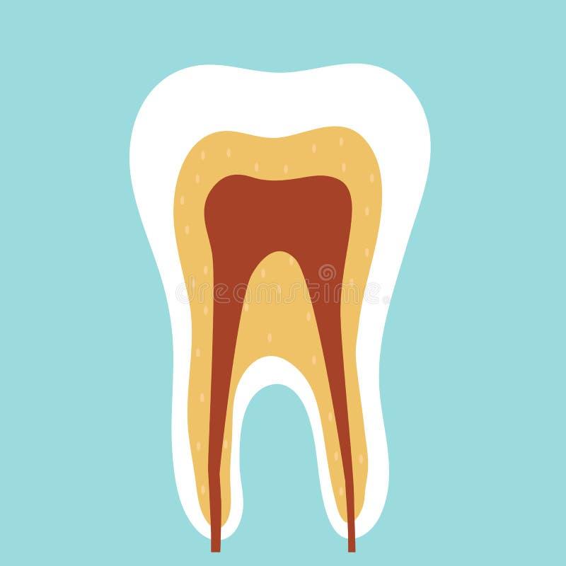 Dente em um corte em um fundo azul dentistry ilustração royalty free