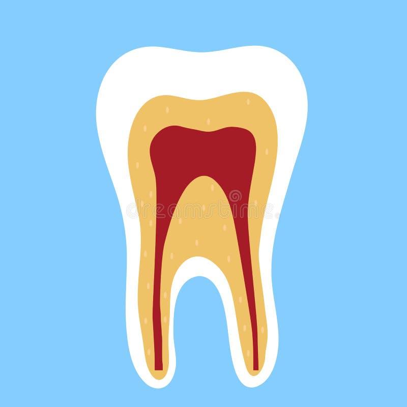 Dente em um corte em um fundo azul dentistry ilustração stock