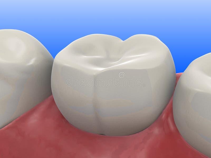 Dente humano ilustração royalty free