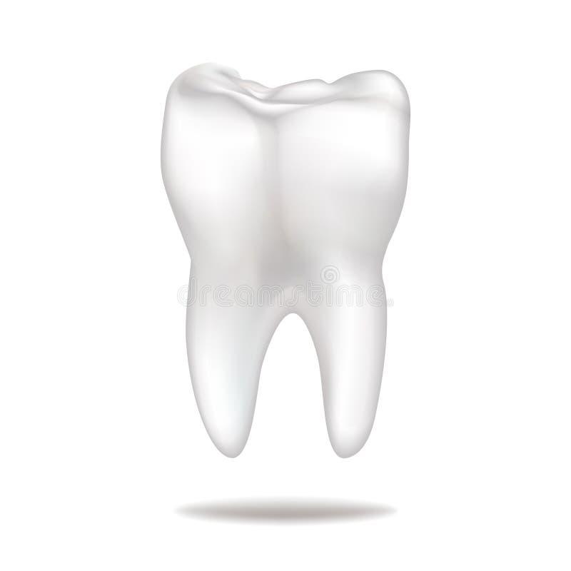 Dente isolato sopra fondo bianco illustrazione di stock