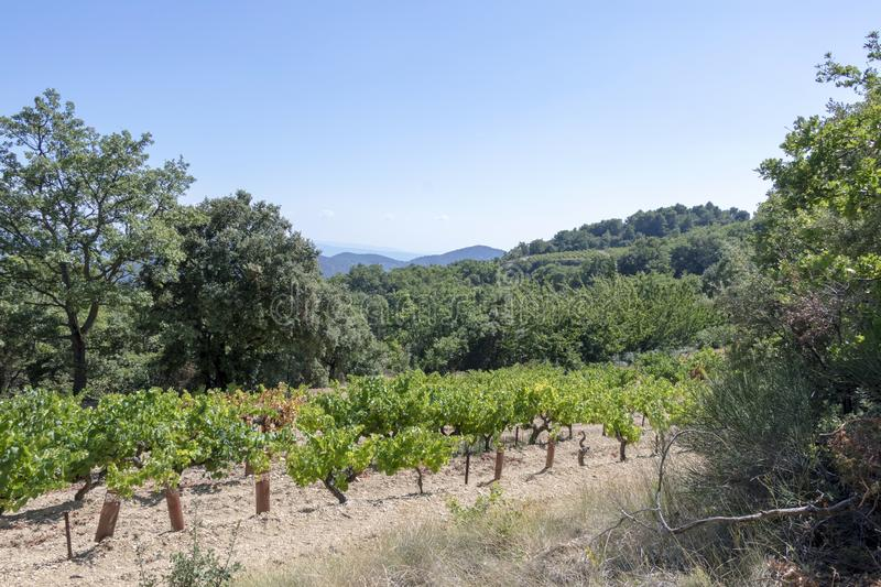 Dentelles de Montmirail chain of mountains and vineyards in wine region Provence in Vaucluse, France stock images