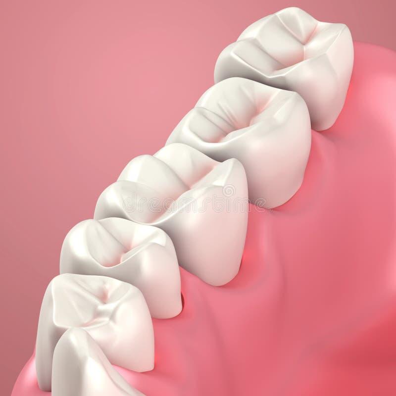 Download Dentes 3D Ou Ascendente Próximo Do Dente Ilustração Stock - Ilustração de ilustração, arte: 26519042