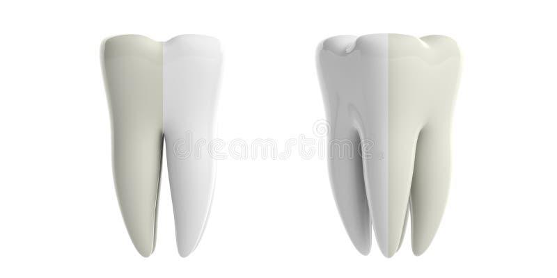Dentes antes e depois de clarear o entalhe no fundo branco ilustração 3D ilustração royalty free