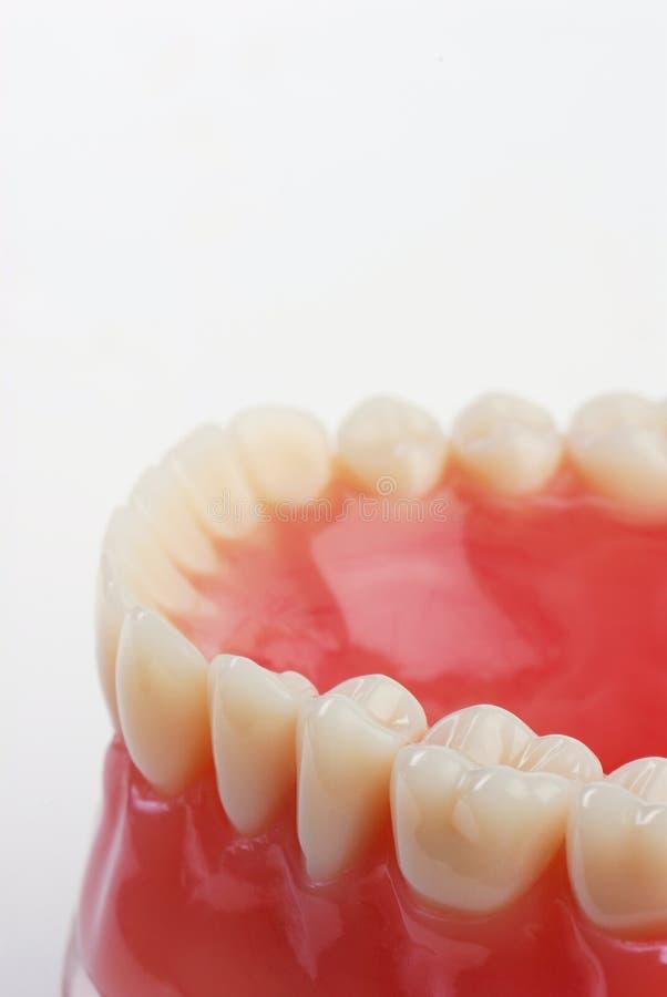 Dentes da amostra do dentista foto de stock