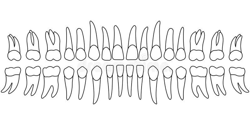 Dentes da carta do dente ilustração do vetor