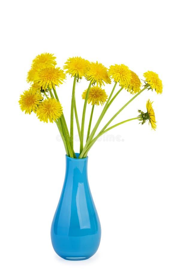 Dentes-de-leão amarelos no vaso cerâmico azul imagens de stock royalty free