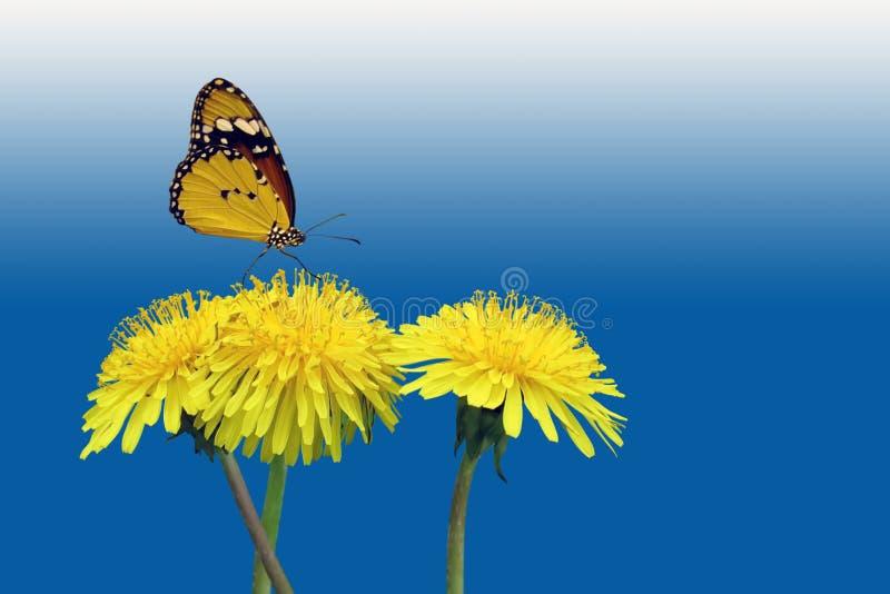 Dentes-de-leão com borboleta ilustração do vetor