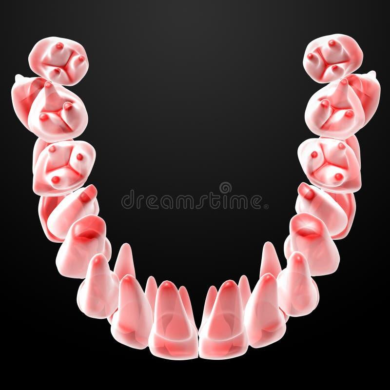 Dentes humanos ilustração stock