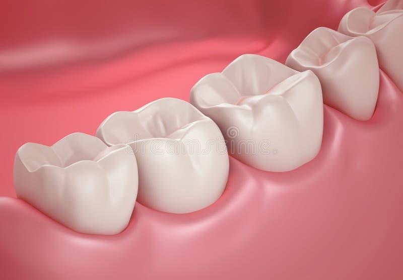 denti 3D o alto vicino del dente illustrazione di stock