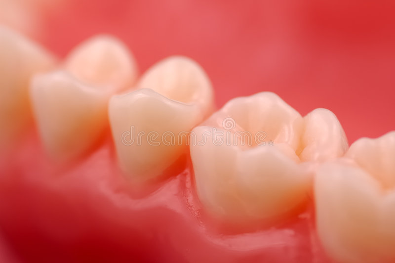 Denti fotografia stock