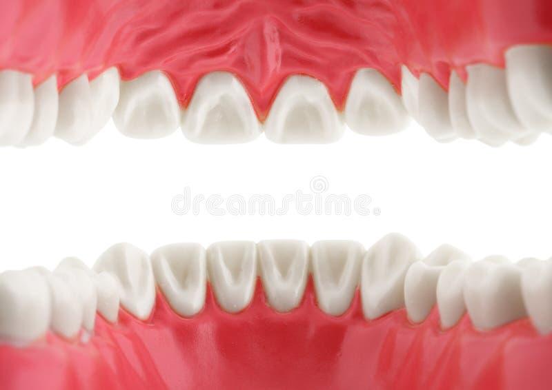 Denti bianchi, vista dalla bocca, isolata con il percorso fotografie stock libere da diritti