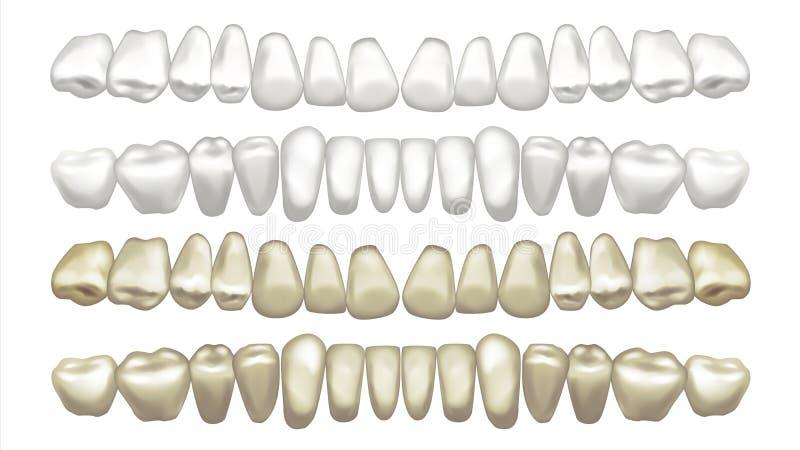 Denti che imbiancano vettore Prima e dopo Imbiancatura dell'impiallacciatura del dente Illustrazione isolata illustrazione vettoriale