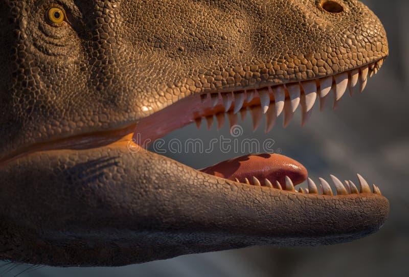 Denti del dinosauro del rex di T taglienti e pronti a cercare fotografia stock libera da diritti