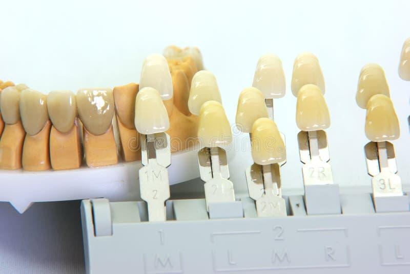 Denti della guida e della porcellana di colore immagine stock libera da diritti