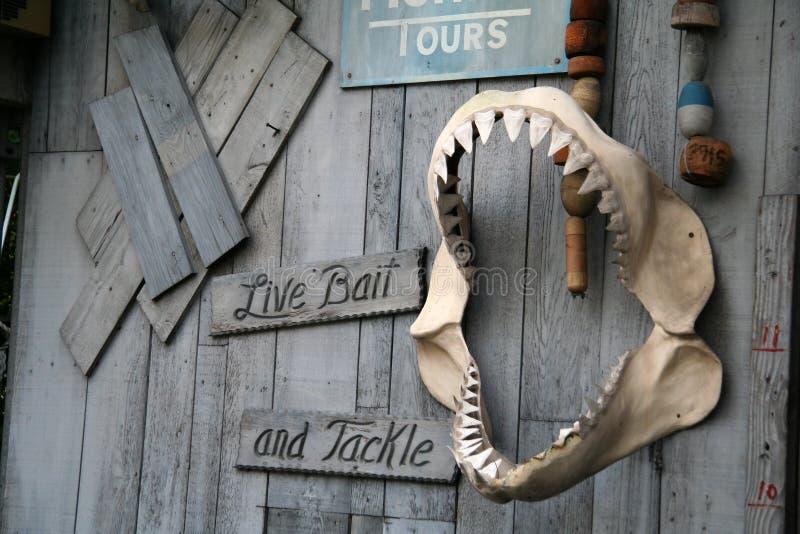 Denti dello squalo immagine stock libera da diritti