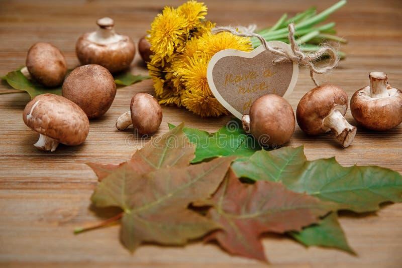 Denti di leone gialli, Forest Mushrooms, foglie verdi sulla Tabella di legno Carta di desiderio Garden& x27; fondo di s fotografie stock libere da diritti