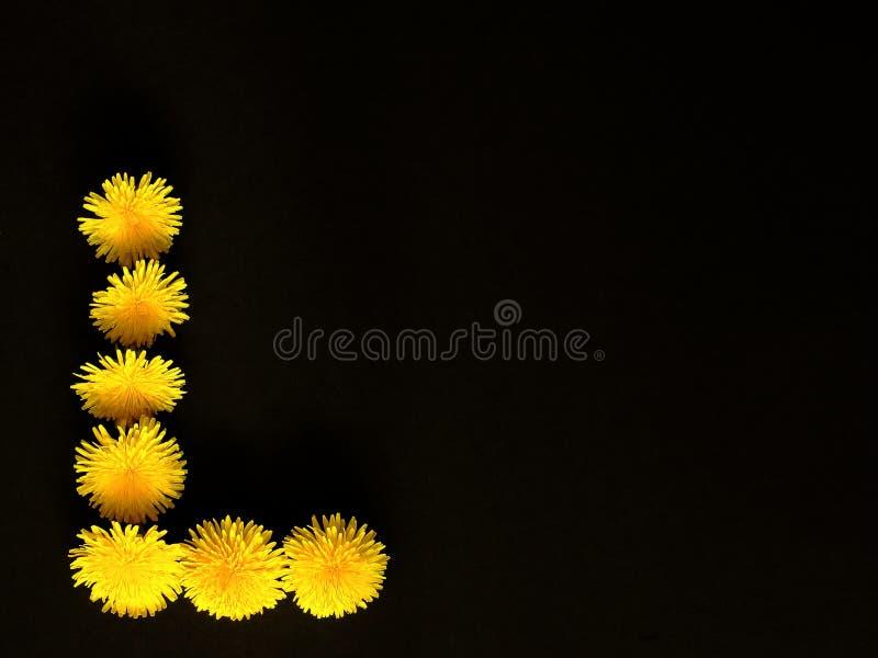 Denti di leone gialli luminosi nella forma di lettera L su fondo nero Bellezza simbolica di concetto, amore Fondo di congratulazi fotografia stock libera da diritti