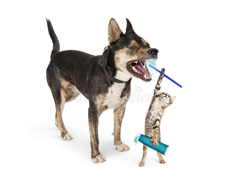Denti divertenti del ` s di Kitten Brushing Dog fotografia stock