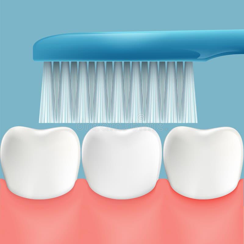 Denti e spazzolino da denti umani Igiene orale Vettore di riserva royalty illustrazione gratis