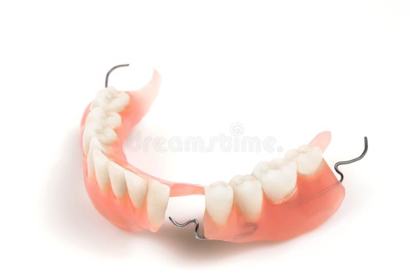 Dentier images libres de droits