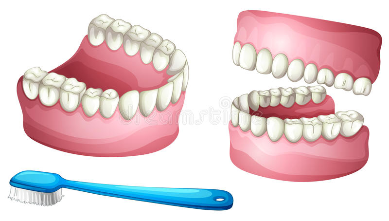 Dentier et brosse à dents illustration stock
