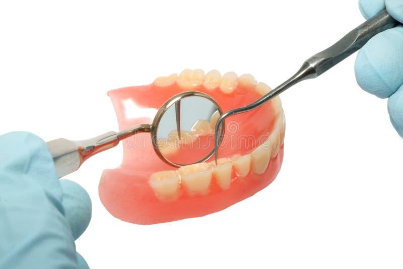 Dentist examines