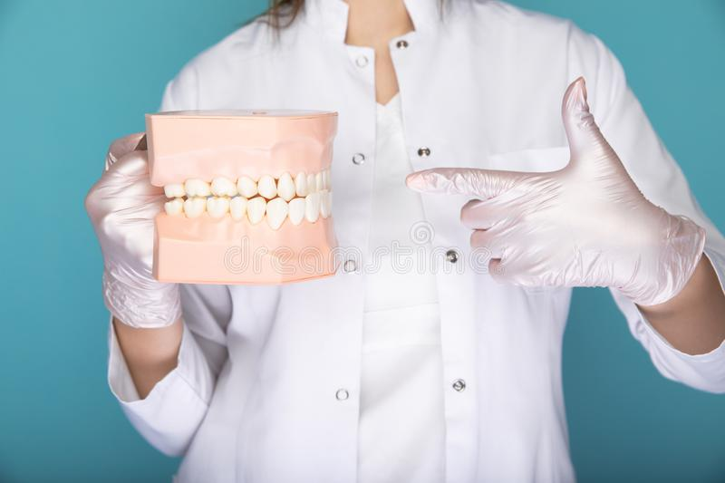 Dentist in gloves holding medical stuff isolated in the blue studio. royalty free stock image
