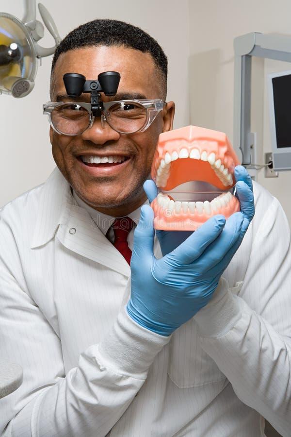 Dentist holding false teeth stock photos