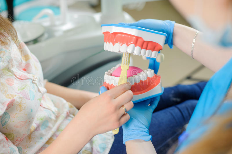 Dentist showing dental jaw model to patient in dentist`s clinic stock photography