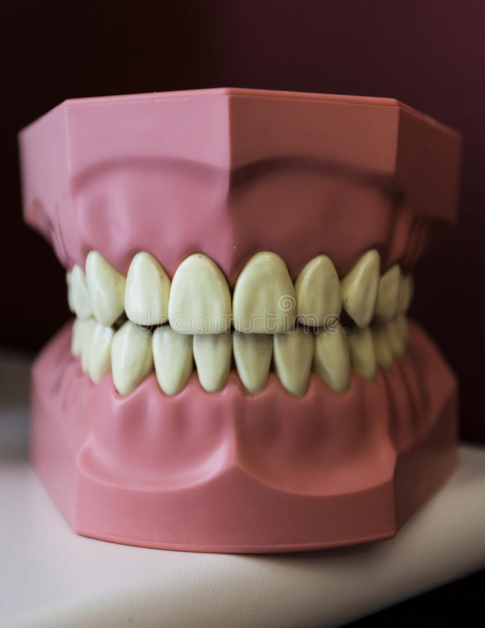 Download Dentist teeth example stock image. Image of oral, mouth - 39506699