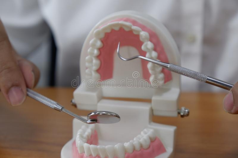 Dentist using tools on teeth model in dental office/ professional dental clinic, dental and medical concept royalty free stock photography