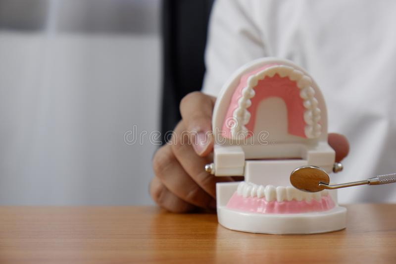 Dentist using tools on teeth model in dental office/ professional dental clinic, dental and medical concept stock photography