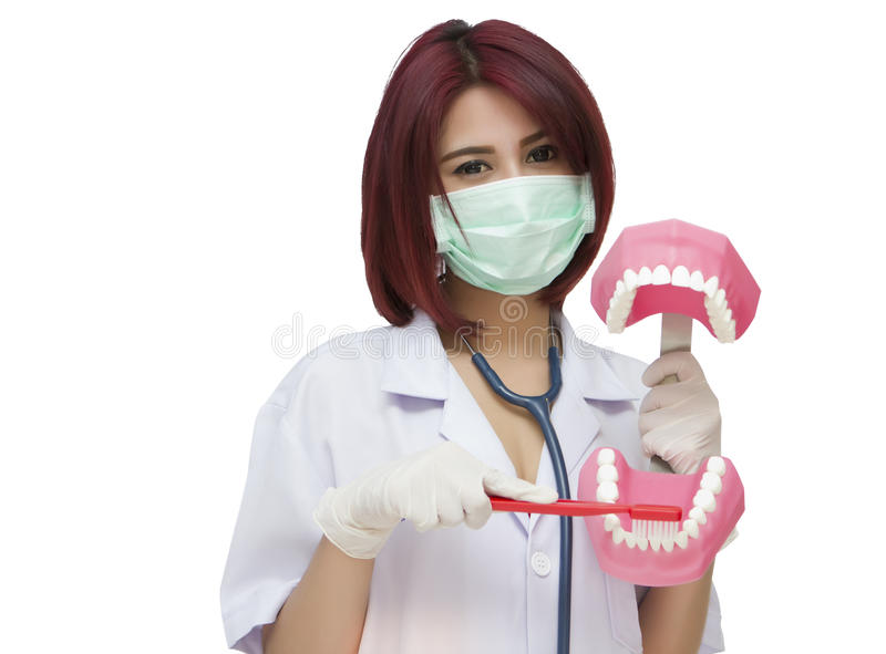Dentist woman with the teeth model royalty free stock photos