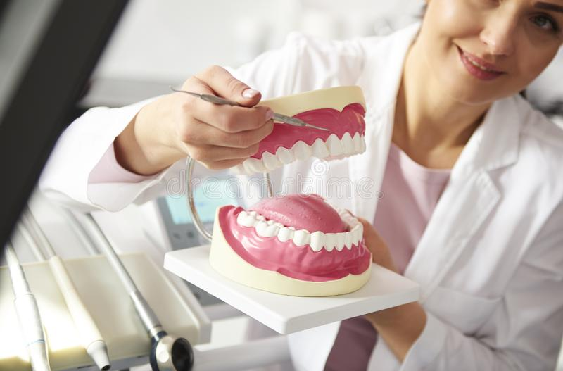 Dentist working with artificial dentures. Close up of dentist working with artificial dentures in royalty free stock photography