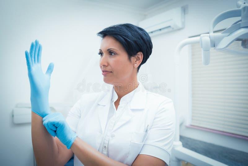 Dentista che indossa guanto chirurgico immagini stock libere da diritti