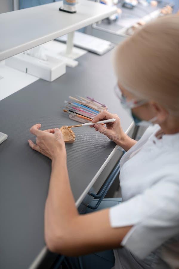 Dentista che pulisce le protesi dentarie con differenti spazzole fotografia stock libera da diritti