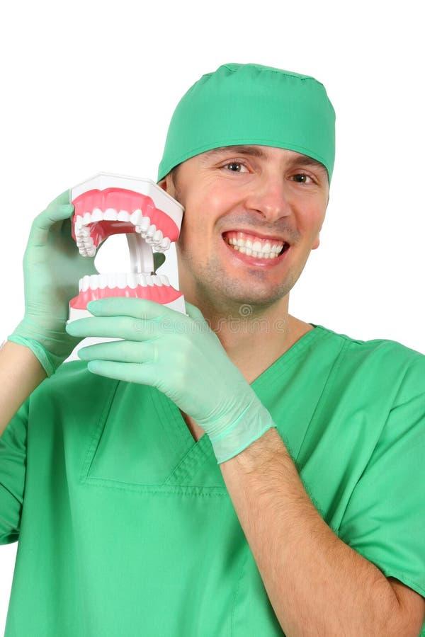 Dentista que mostra um modelo grande da reprodução de Teet fotografia de stock