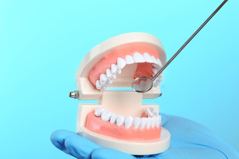 Dentista que muestra cómo a los dientes del examen con el modelo educativo de la cavidad bucal y del espejo de boca foto de archivo libre de regalías