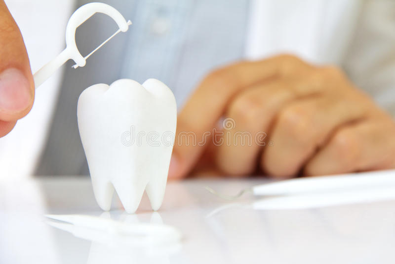 Dentista que sostiene la seda dental con la muela imagen de archivo libre de regalías