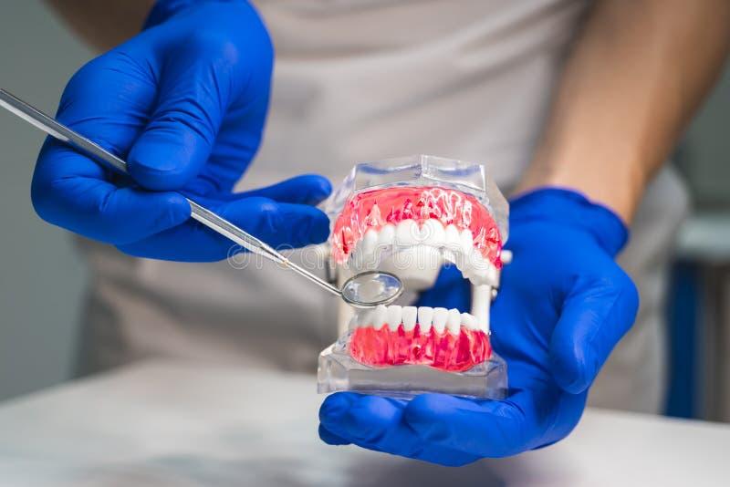 Dentista que veste as luvas médicas que guardam o modelo da maxila em uma mão e no espelho médico em uma outra clínica dentro den fotografia de stock royalty free